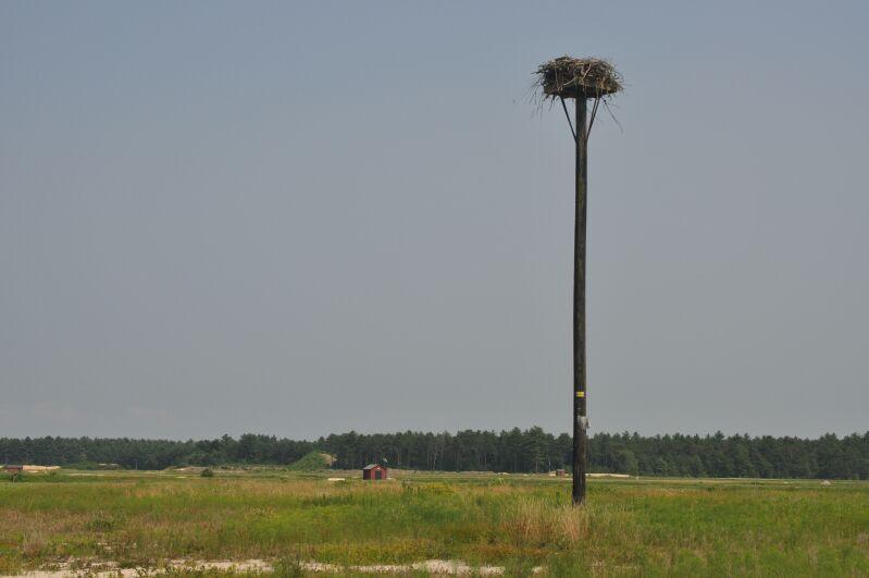 Osprey Nesting Platform